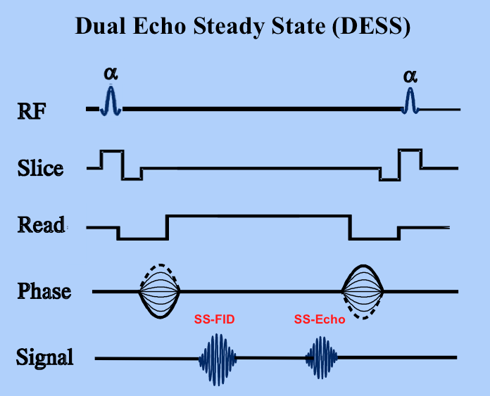 Dual-echo steady state (DESS)
